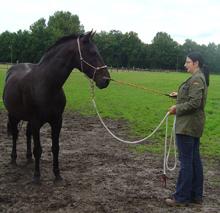 Horsemanship - Bodenarbeit zum Vertrauensaufbau