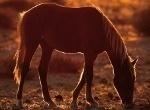 pferdelexikon-startseite