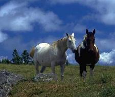 Pferdelexikon