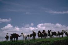 Verhalten in der Herde