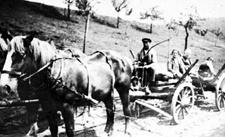 Arbeiten mit Pferden