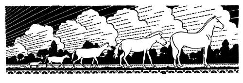 Evolutionsgeschichte des Pferdes