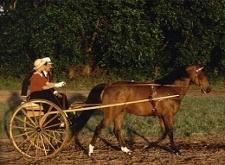 Fahrausrüstung - Fahren mit Pferden