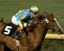 Galopprennen - Jockey
