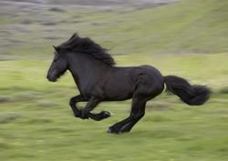 WM der Islandpferde - tolle Pferde hautnah im Sport erleben