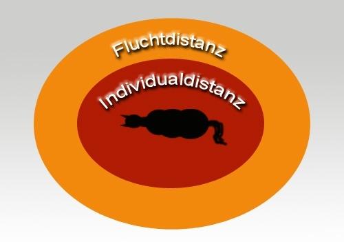 Individualdistanz
