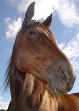 Pferdchen.org - Pferde und Reiten