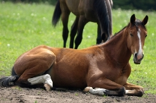 Pferde - faszinierende Geschöpfe