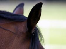 Pferde hören sehr gut