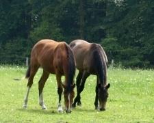 Die bunte Welt der Pferderassen