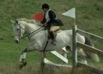 pferdesport-startseite