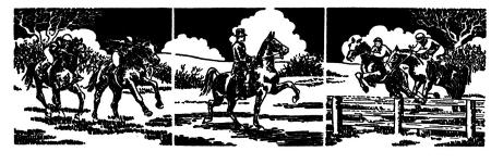 Pferdesport - viele Facetten - eine Faszination
