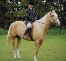 Reitausrüstung von Pferd und Reiter