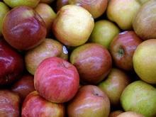 Saftfutter Pferde: Äpfel