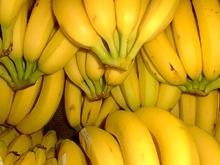 Bananen als Saftfutter für Pferde?