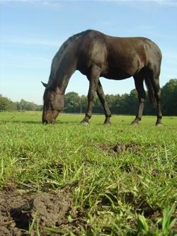 Das richtige Pferd finden - Verkaufspferde unter die Lupe nehmen