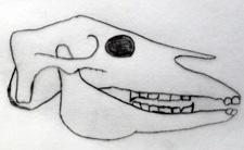 Zahnhaken beim Pferd